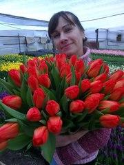 Продам цветы тюльпаны к 8 марта оптом